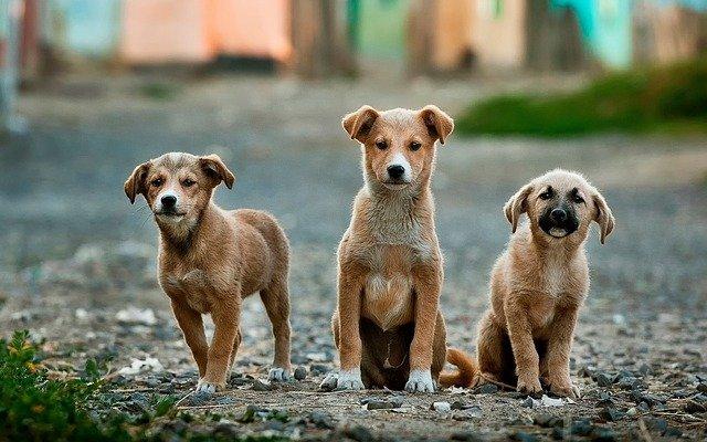 Most Inbred Dog Breeds
