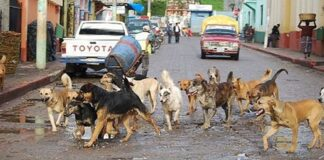 Surprising Facts about Street Dogs in Mexico