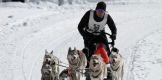 Dog Sled Teams