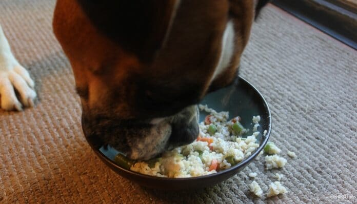 How Long Should I Keep My Dog On Chicken And Rice?