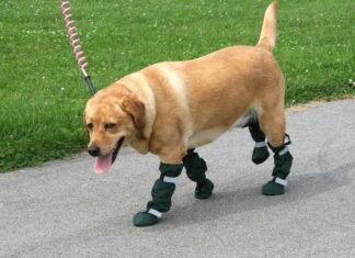 dog boots for dogs that draft their feet
