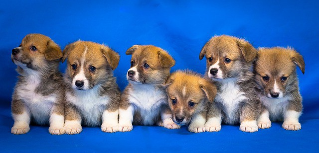How Much Weight Should A Puppy Gain Per Week?