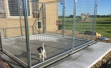 How to Clean Concrete Dog Kennel