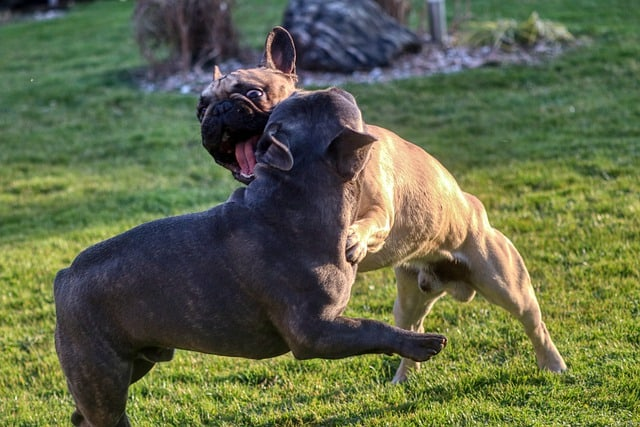 How to Reintroduce Dogs after a Fight