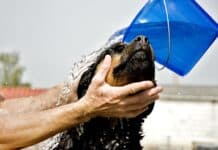 Is Palmolive Dish Soap Safe for Dogs?