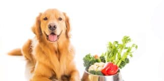 How to Prepare Vegetables for Dogs