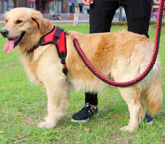 Worst Dog Breeds off Leash