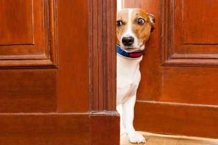 Dog Proof Door Latches