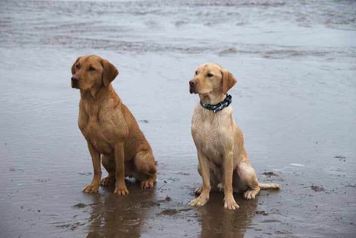 Dog Breeds with Turned Out Feet
