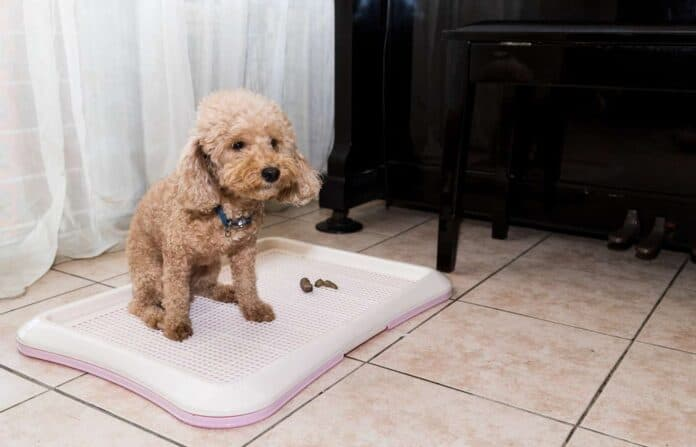 What to Put Under Puppy Pee Pads