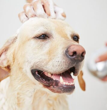 How To Get A Tick Off A Dog With Dish Soap