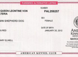 How To Register A Dog With AKC Without Papers