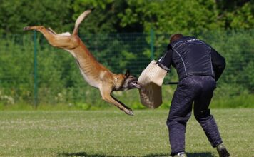 Dog Attack Protection Devices