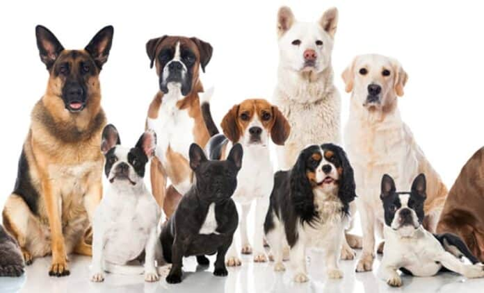 Dog Breeds With Pictures and Prices