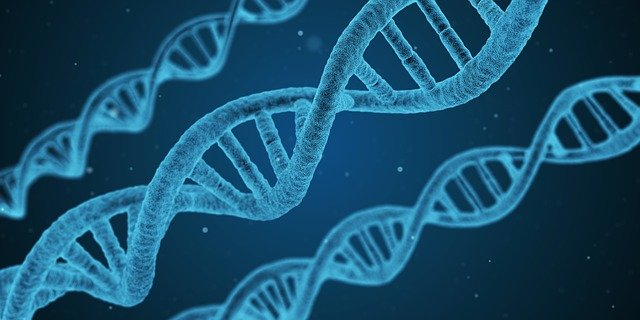 Can You Register A Dog With DNA Test?