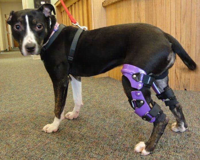Can A Dog Die From A Broken Leg?