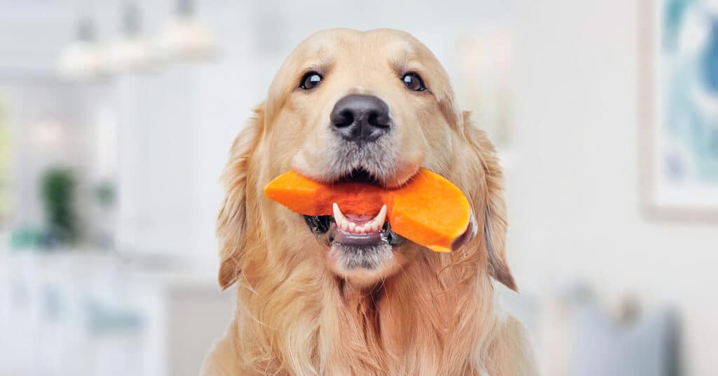 How to Cook Pumpkin for Dogs