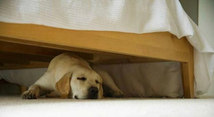 How to Stop Dog From Going under The Bed