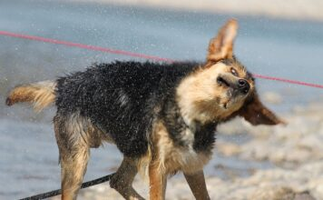 Dog Keeps Throwing Head Back—What Does It Mean? (Plus What to Do)