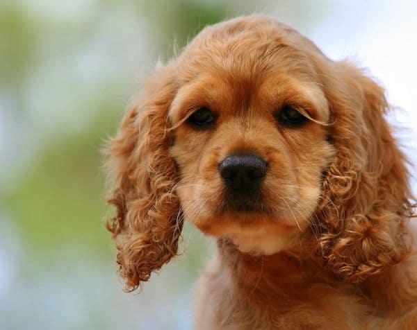 Dogs with Long Eyelashes
