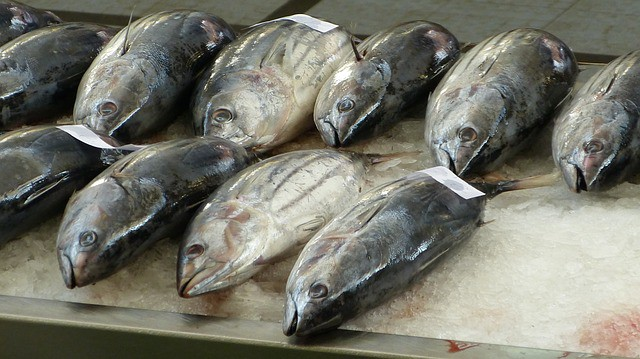 Is Tuna Good For Dogs With Kidney Disease?