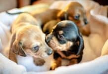 Can Puppies Be Born Days Apart?