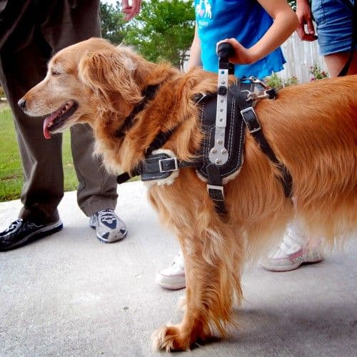 How to Get a Service Dog For Free